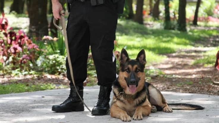 Охрана территории с собаками: изучаем особенности процесса